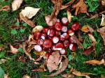 The conker stash