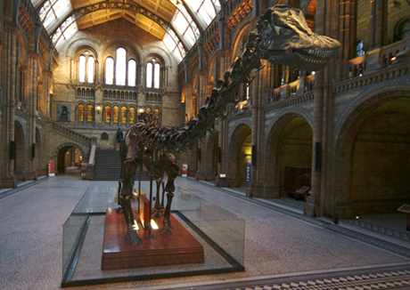 Diplodocus in the Entrance Hall